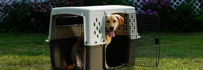 Miller Dog Crates Various Sizes Available Farmers